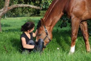 Pferdehalterhaftung - Wer ein Pferd besitzt, muss für Schäden aufkommen, die das Tier anrichtet.