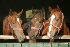Der Kauf eines Pferdes sollte wohl überlegt sein.