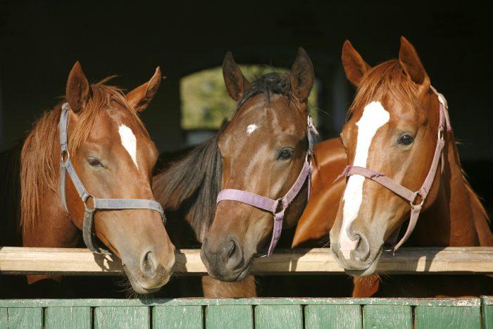 erkrankung am pferdefuß kreuzworträtsel